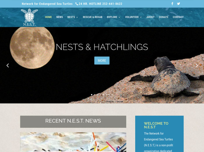 Nest Sea Turtle Website Outer Banks Internet