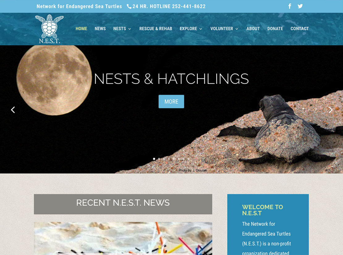Nest Sea Turtle Website Outer Banks Internet